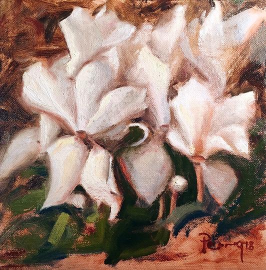 #3 White Cyclamen