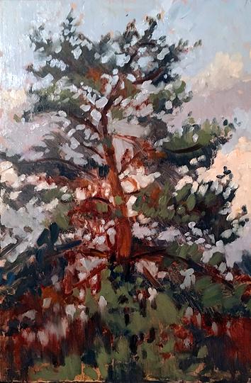 #21 Tree Top